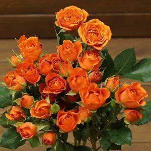 Роза спрей Бейби Оранж (Baby Orange)